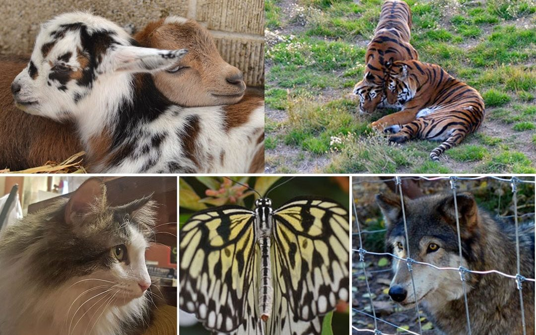 5 Can't-Miss Animal Experiences Near Denver