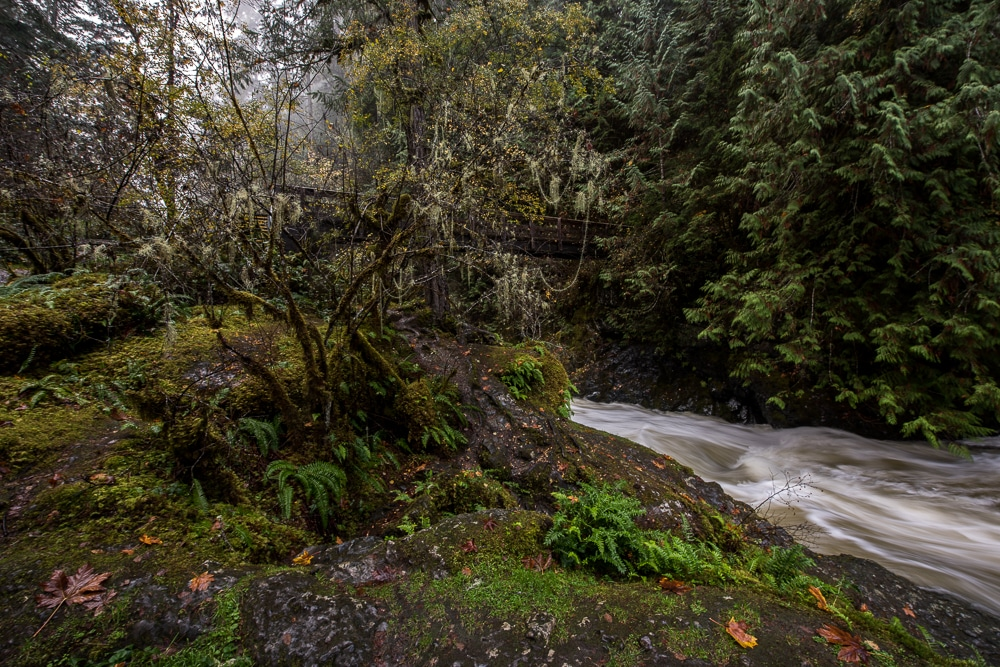 Lots of trees and greenery around the flowing water nearby the Englishman River Falls