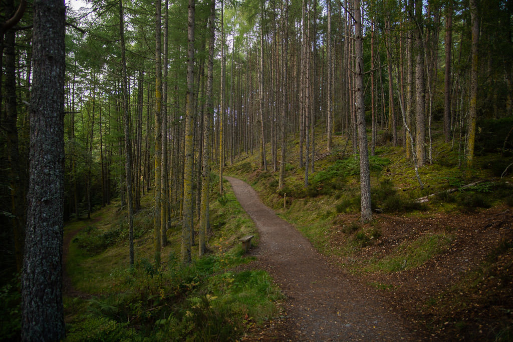 A beautiful and wooded section of the  trail to Rogie Falls from the parking lot