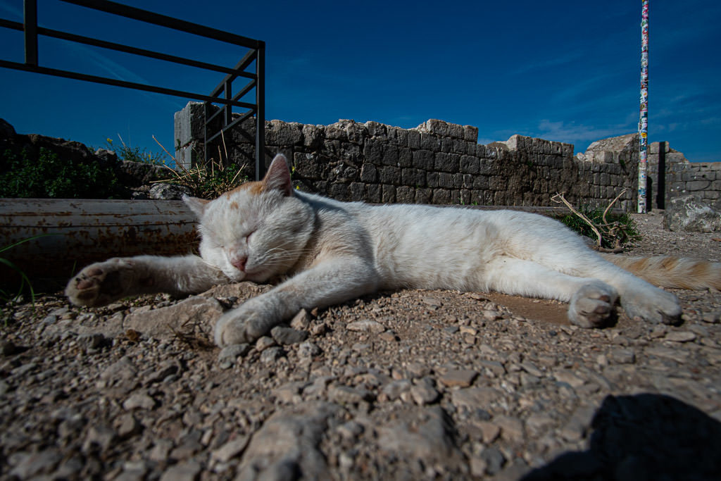 White cat laying in the sun on the top of Kotor Fortress